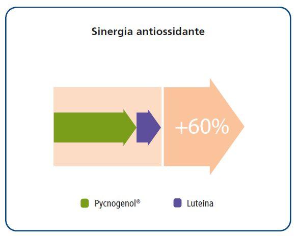 Sinergia antiossidante Pycogenol
